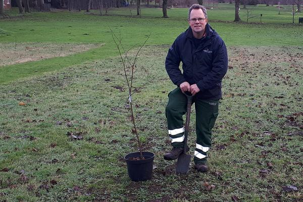 Gardener planting tree in Beacon Park